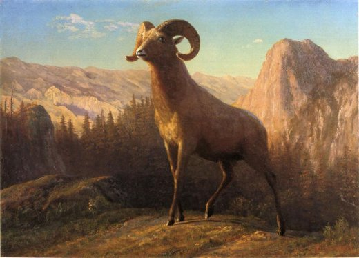 albert bierstadt a rocky mountain sheep ovis montana painting