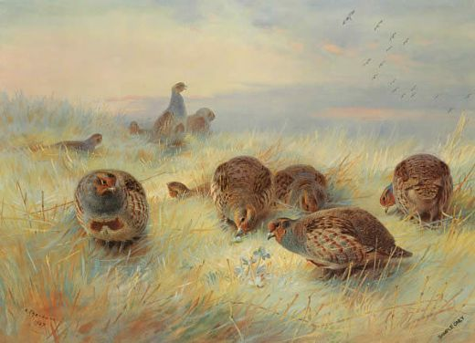 archibald thorburn a frosty dawn oil painting