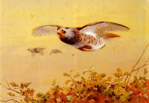 archibald thorburn english partridge in flight paintings