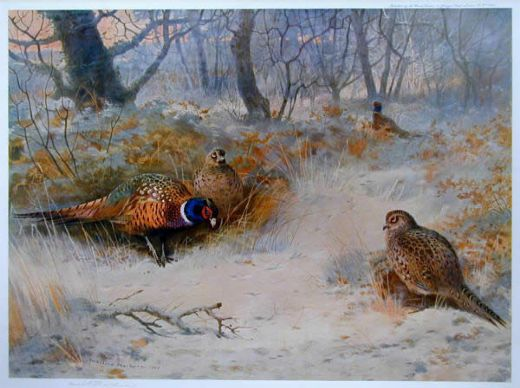 archibald thorburn frost in the coverts paintings