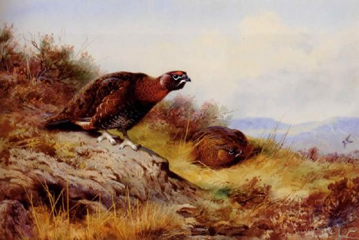 archibald thorburn red grouse on the moor painting