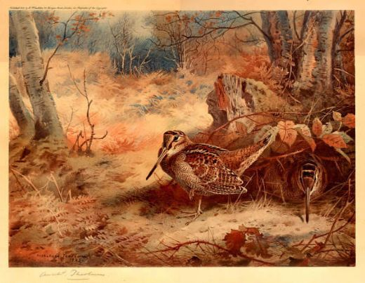 archibald thorburn woodcock painting