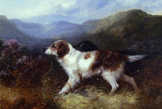 george armfield two setters in a landscape paintings