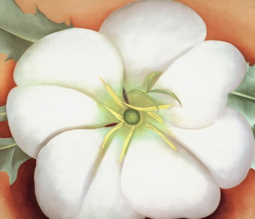 georgia o keeffe white flower on red earth no. 1 paintings