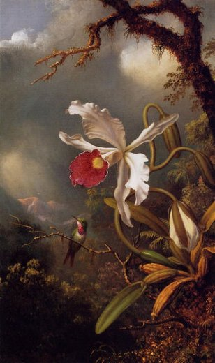 martin johnson heade an amethyst hummingbird with a white orchid painting