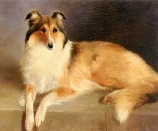 original paintings a collie rough paintings