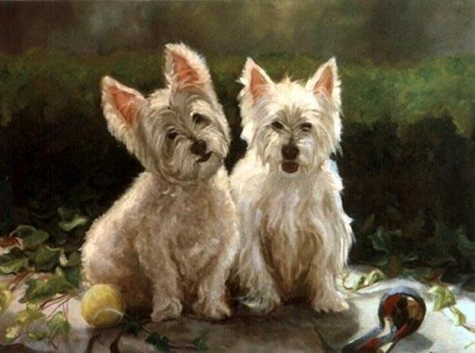 original paintings two lovely australian terrier painting