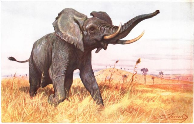original   one elephant 1 painting