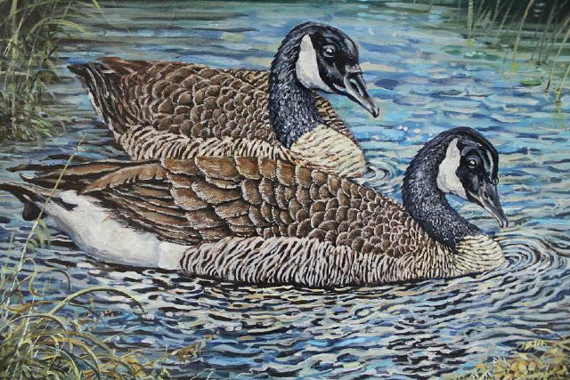 original canada geese birds photos painting
