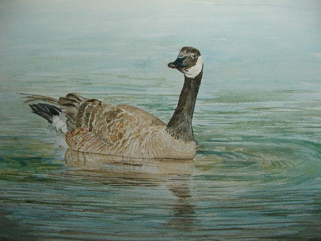 original canada goose in lake canadian birds painting