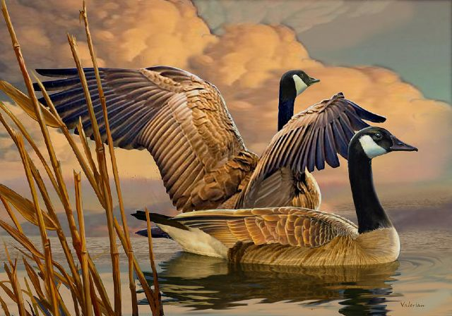 original canadian geese canada birds painting