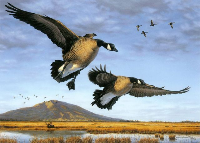 original geese canada birds paintings