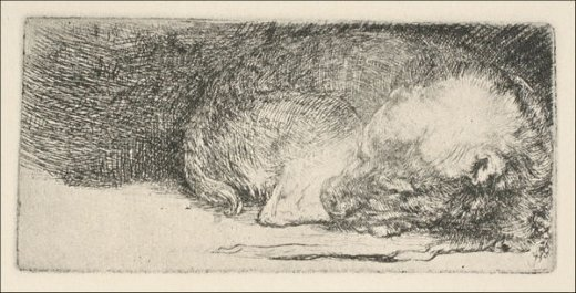 rembrandt van rijn the little dog sleeping prints