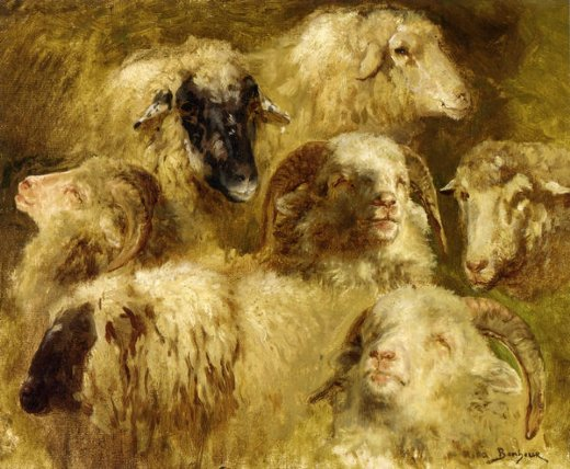 rosa bonheur heads of ewes and rams painting