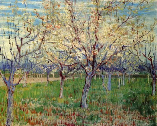 vincent van gogh orchard with blossoming apricot trees paintings