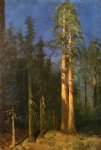 albert bierstadt california redwoods painting