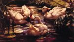 alexander koester acrylic paintings - ducks in a forest pond by alexander koester