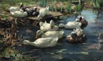 ducks in a quiet pool by alexander koester art