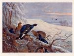 archibald thorburn blackgame in winter painting