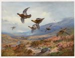 archibald thorburn famous paintings - grouse over the burn by archibald thorburn