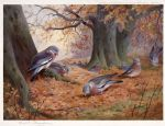 archibald thorburn wood pigeon on beech mast painting