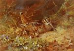 archibald thorburn woodcock and chicks paintings