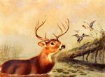 buck in a marsh by arthur fitzwilliam tait painting