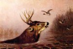deer in marsh by arthur fitzwilliam tait painting