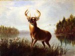 arthur fitzwilliam tait watercolor paintings - eight point stag by arthur fitzwilliam tait