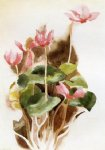charles demuth original paintings - cyclamen ii by charles demuth
