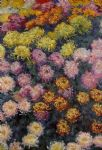 bed of chrysanthemums by claude monet paintings