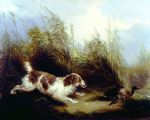 spaniel flushing mallard by george armfield prints