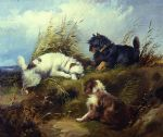 terriers by george armfield prints