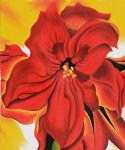 georgia o keeffe acrylic paintings - red amaryllis by georgia o keeffe