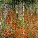 birch forest by gustav klimt painting