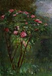 gustave caillebotte watercolor paintings - rose bush in flower by gustave caillebotte