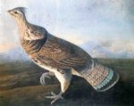 ruffed grouse by john james audubon painting