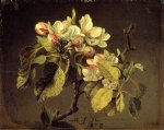 martin johnson heade print - a branch of apple blossoms and buds by martin johnson heade