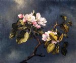 martin johnson heade print - apple blossoms by martin johnson heade