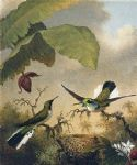 fairy acrylic paintings - black eared fairy by martin johnson heade