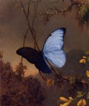 butterfly acrylic paintings - blue morpho butterfly by martin johnson heade