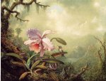 martin johnson heade heliodore s woodstar and a pink orchid painting