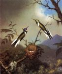 birds original paintings - hummingbirds at their nest sun gems by martin johnson heade