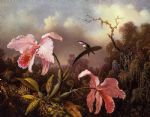 bird famous paintings - orchids and hummingbird 2 by martin johnson heade