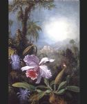 martin johnson heade orchids passion flowers and hummingbird painting 81417