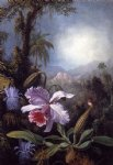 martin johnson heade orchids passion flowers and hummingbird posters