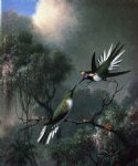 martin johnson heade two hummingbirds sun gems heliactin cormuta posters