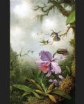 martin johnson heade two hummingbirds with a pink orchid painting