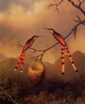 martin johnson heade two hummingbirds with their young posters
