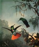 martin johnson heade two hummingbirds posters